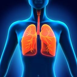 Заболевания дыхательных путей — симптомы, профилактика, лечение
