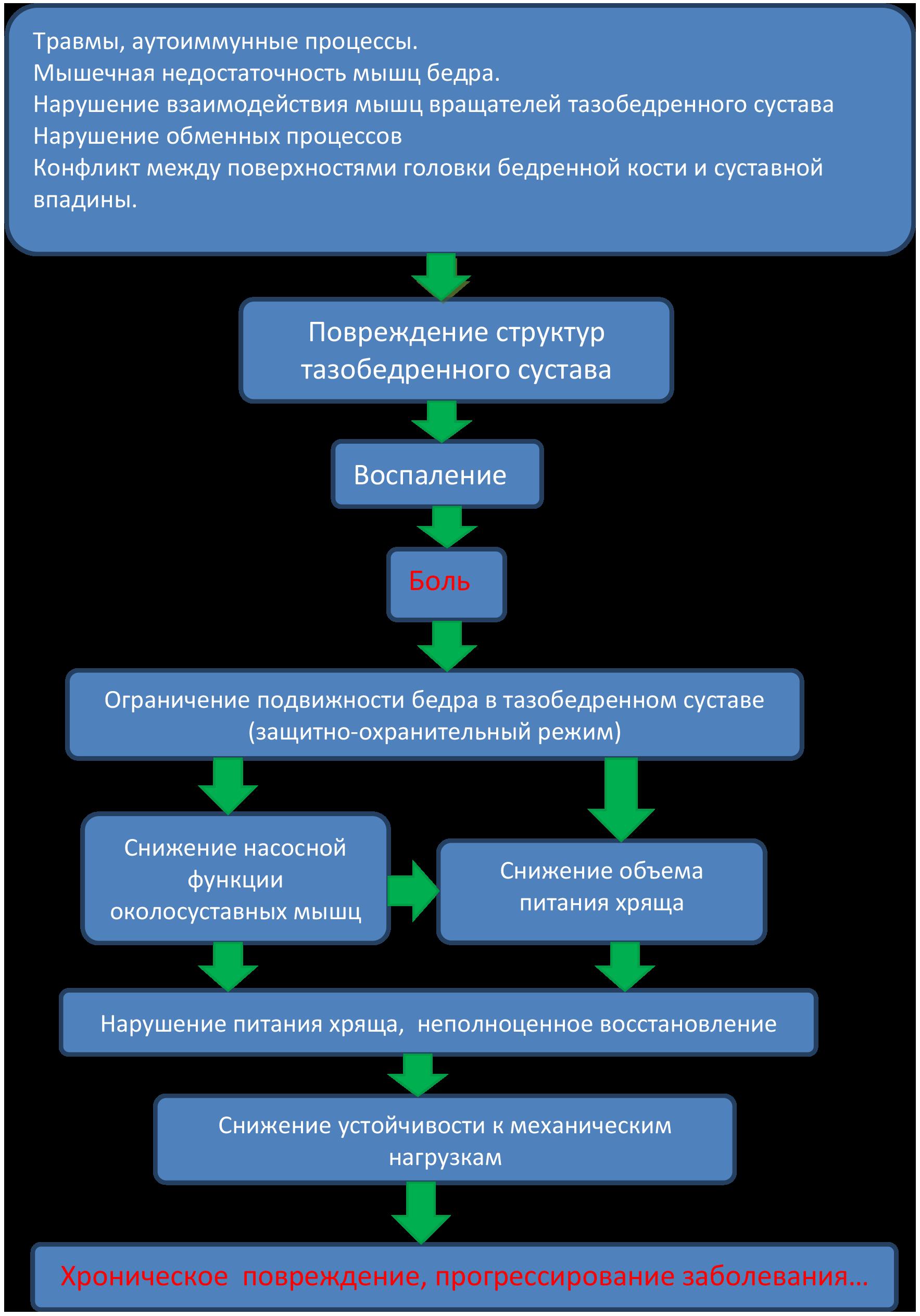 Питание при коксартрозе тазобедренного сустава 2 степени