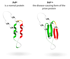 Вирусы, прионы, вироиды - организменный уровень организации жизни