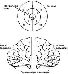 Адренокортикотропный гормон (актг)