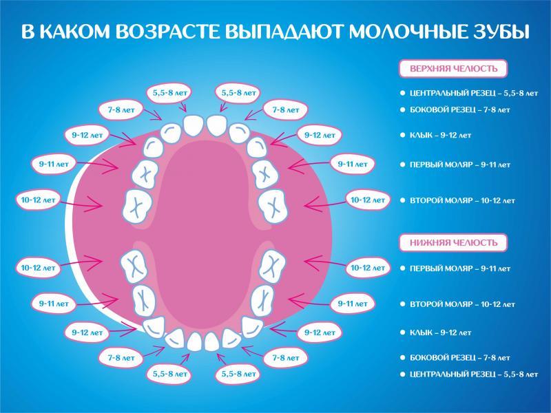 Какие зубы меняются у детей: схема, когда меняются, в каком возрасте меняются на постоянные