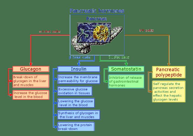 Гормоны поджелудочной железы и их функции в организме