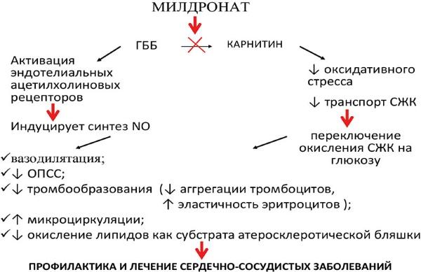 От чего помогает милдронат и для чего его назначают: показания и дозирока, противопоказания и побочные действия
