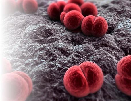 Менингококковая инфекция у детей и взрослых