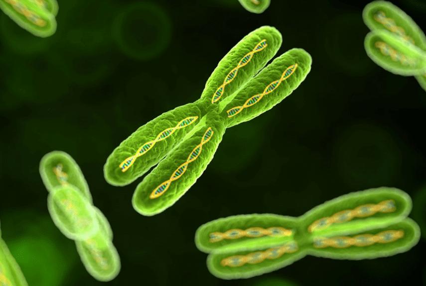 Нейрофиброматоз— симптомы, причины появления, лечение