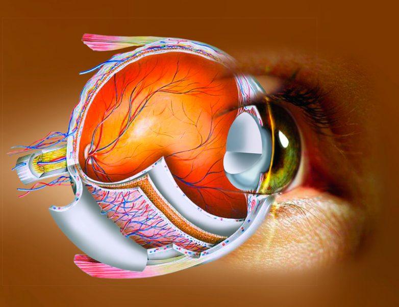 Куриная слепота: причины, диагностика, лучшие методы лечения — симптомы