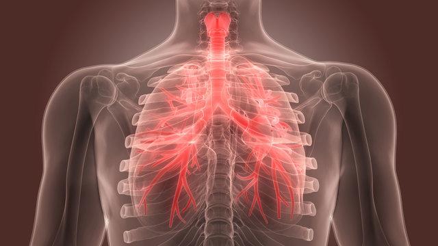 Для чего назначают бромгексин? инструкция по медицинскому применению