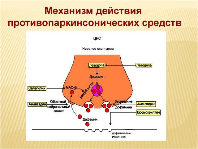 Побочные эффекты препарата мендилекс