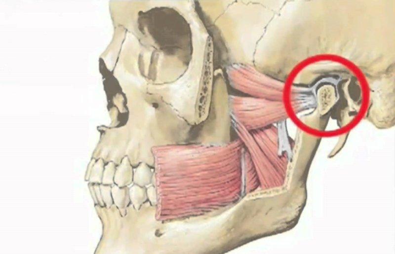 Основы гнатологии. лечение заболеваний и дисфункций височнонижнечелюстного сустава