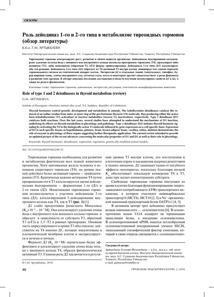Тиреоидные гормоны: что такое, виды (т3, т4), синтез, функции, анализы