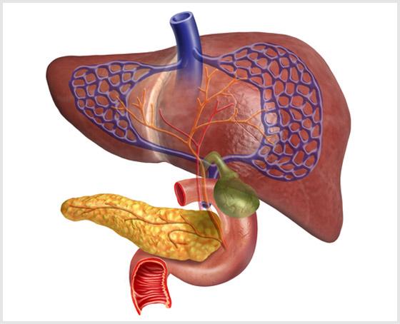 Сладж синдром (билиарный сладж) желчного пузыря: причины, симптомы, лечение