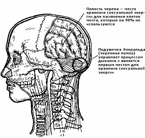 Лечение преждевременной эякуляции :: polismed.com