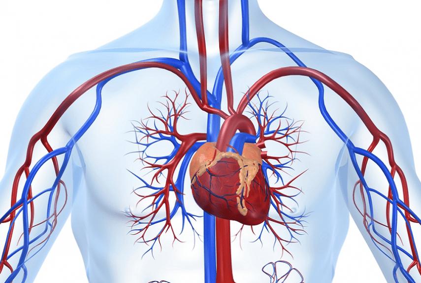 Что такое кардиосклероз: виды и причины, симптомы и лечение