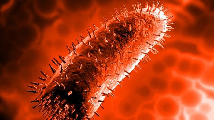 Коринебактерии дифтерии. вирус бешенства, морфология, биологические свойства, вирусные включения. патогенез заболевания. лабораторная диагностика бешенства вирус бешенства микробиология