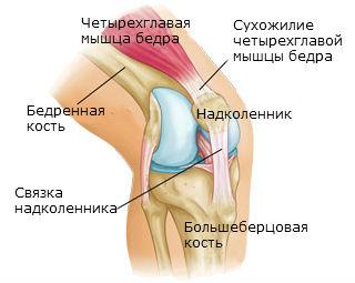 Принципы диагностики, лечения и оказания первой помощи при растяжении связок коленного сустава
