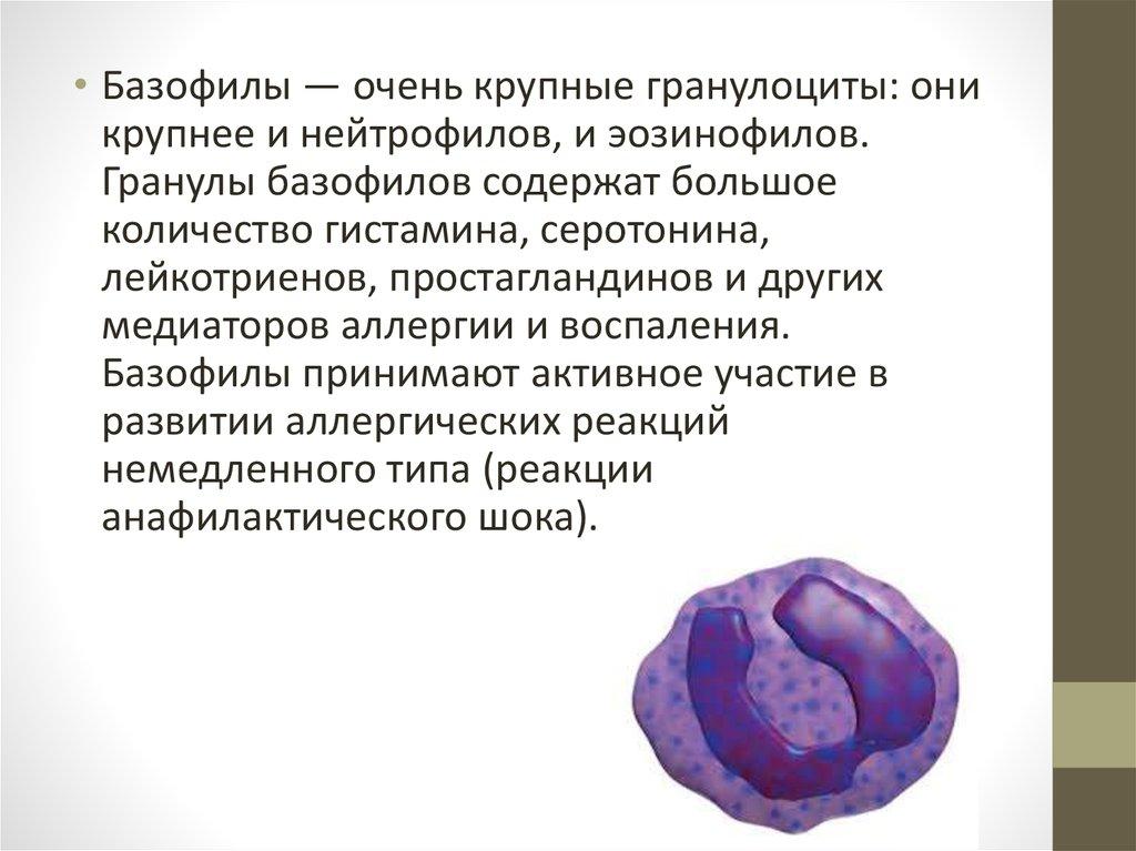 У меня в анализе крови нет показателя миелоцитов и базофилов