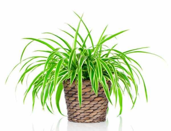 Комнатные растения снижают стресс у офисных работников