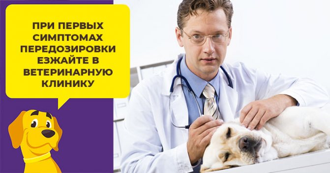 Подробная инструкция по применению апоквела для собак