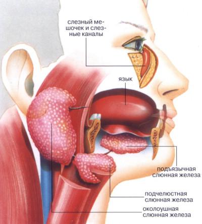 Лечение синдрома шегрена - медицинский портал eurolab