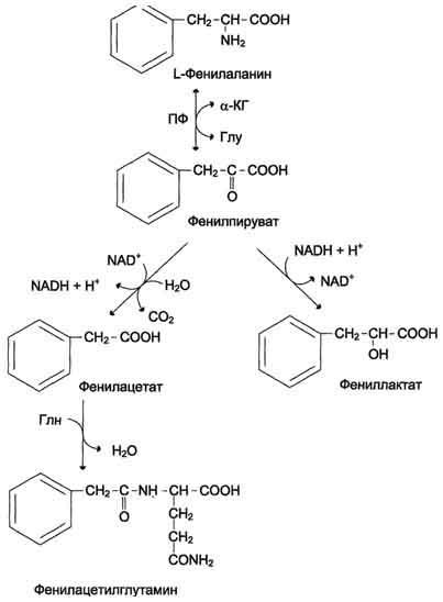 Нарушения белкового обмена