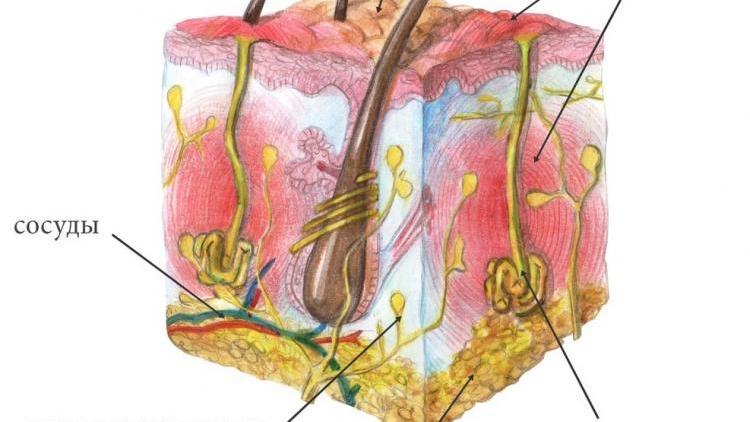 Подмышечный гидраденит