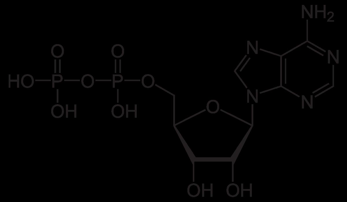 Аденозинтрифосфат - adenosine triphosphate - qwe.wiki
