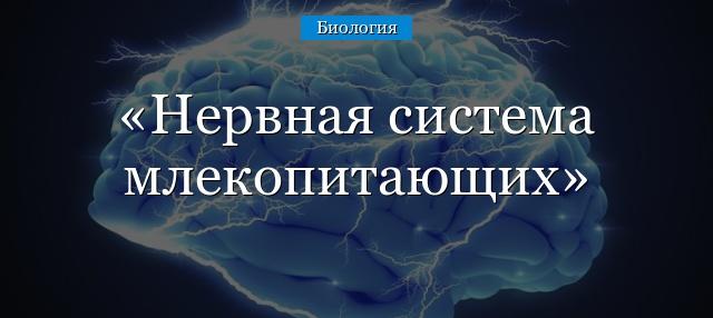 Анатомия: периферический отдел парасимпатической нервной системы.