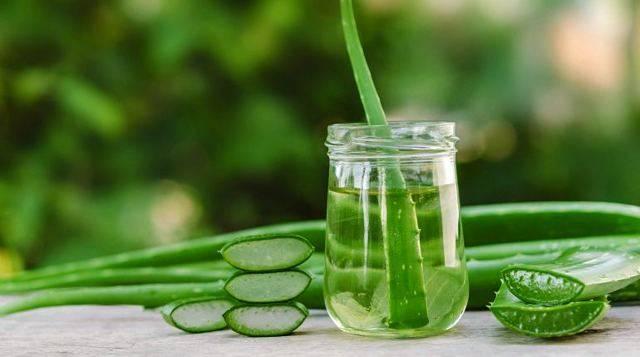 Топ-5 рецептов с использованием алоэ при простуде и советы по применению лечебного растения