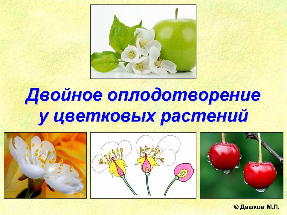 Процесс оплодотворения яйцеклетки