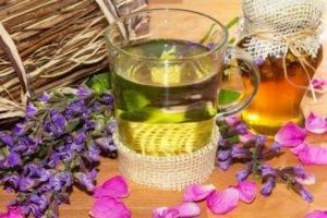 От чего помогает шалфей — полезные свойства растения, применение в косметологии и народной медицине