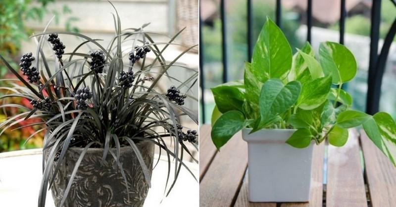 15 комнатных растений, улучшающих воздух в вашем доме