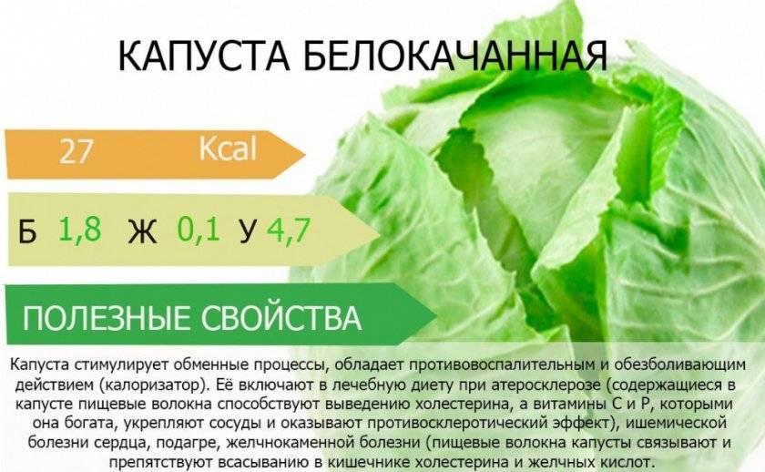 Капустный лист от кашля без меда. капустный лист от кашля. капустный лист с медом