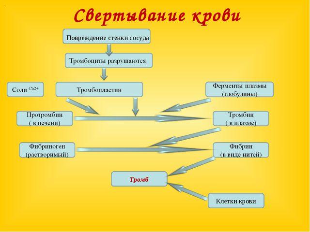 Назначение тромбоцитов в крови
