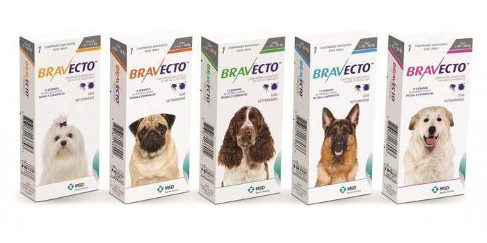 Бравекто для собак: инструкция по применению