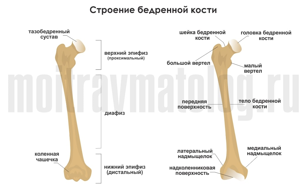 Переломы шейки бедра: классификация, симптомы, диагностика, лечение