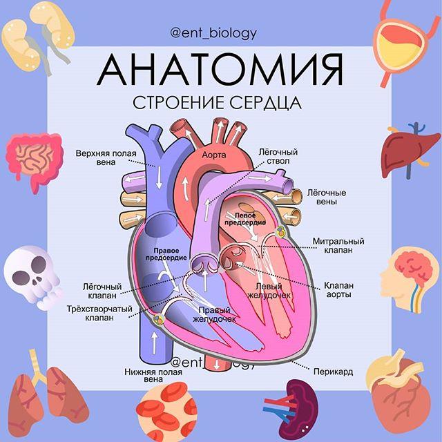 Гемоперикард и тампонада сердца