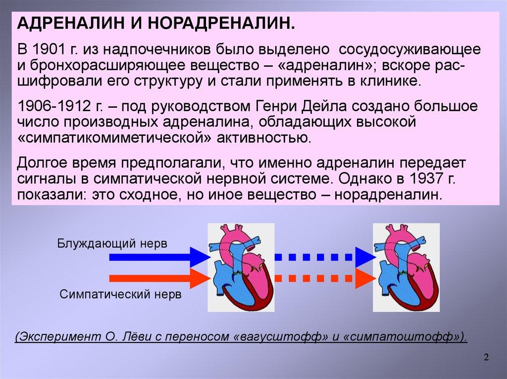 Адренергические процессы адреномиметики и адренолитики