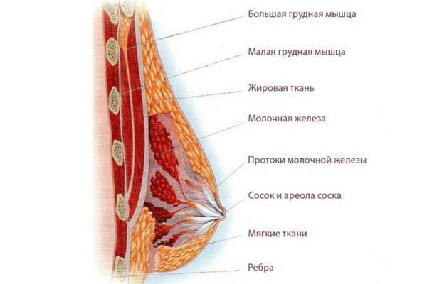 Набухла грудь после месячных: опасные причины, профилактика