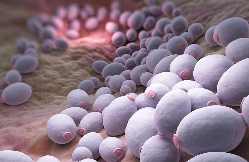 Что такое грибок кандида, как его лечить?