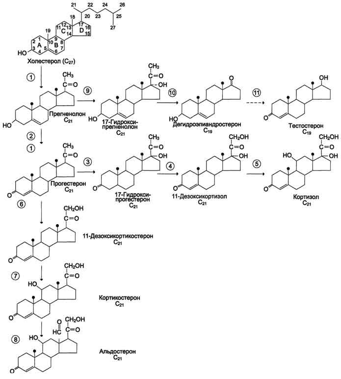 Какие у холестерина производные?