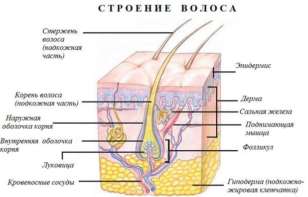 Меланин. пигментация кожи. помощь врача дерматолога