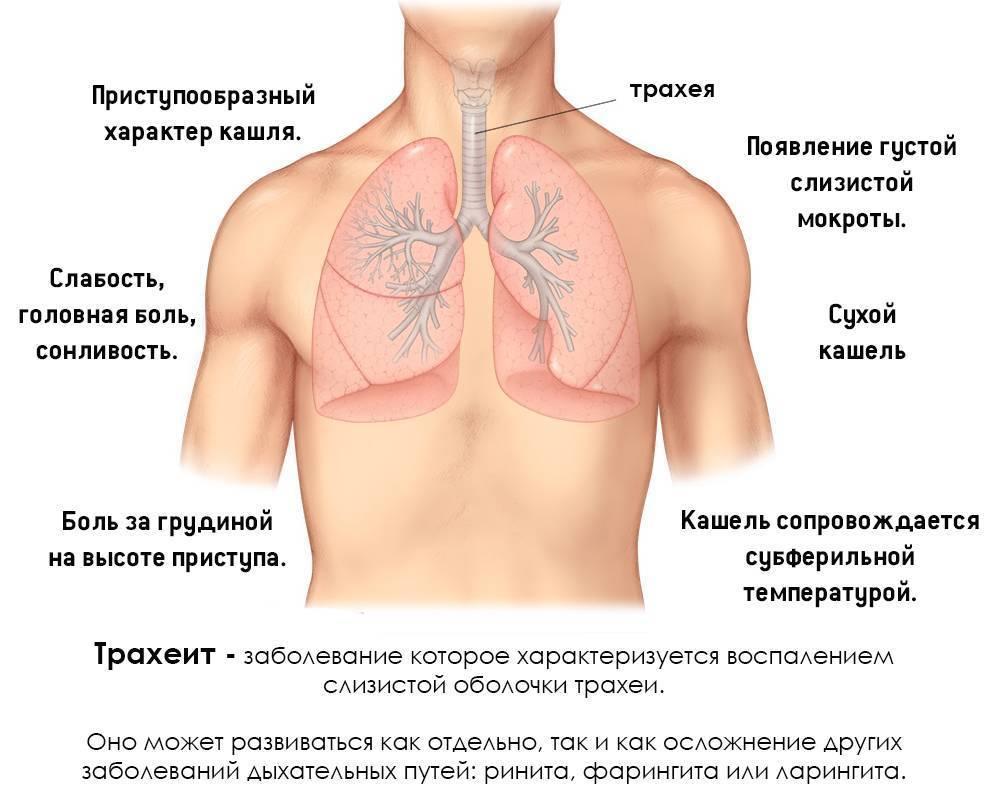 Как отличить бронхит от пневмонии?
