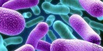 Диагностика крови на антитела к микобактериям туберкулеза