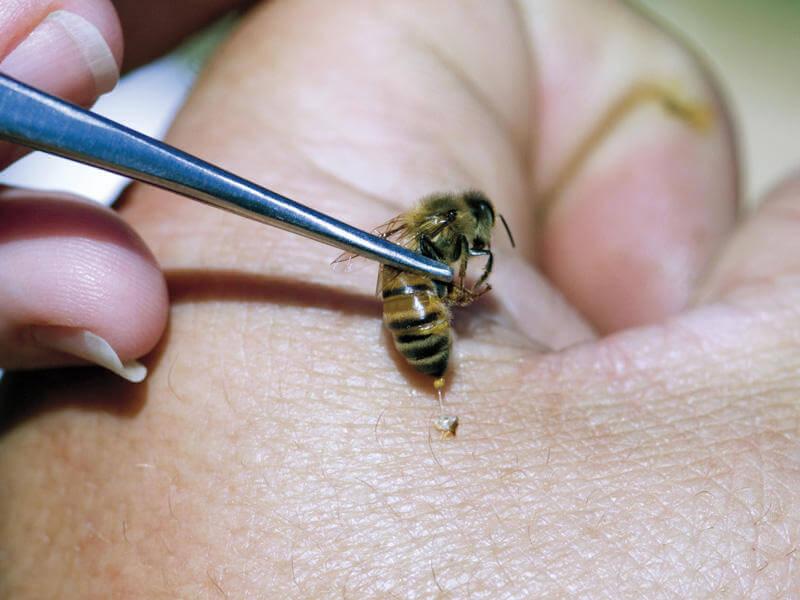 Мази для суставов, спины, укусов на основе пчелиного яда