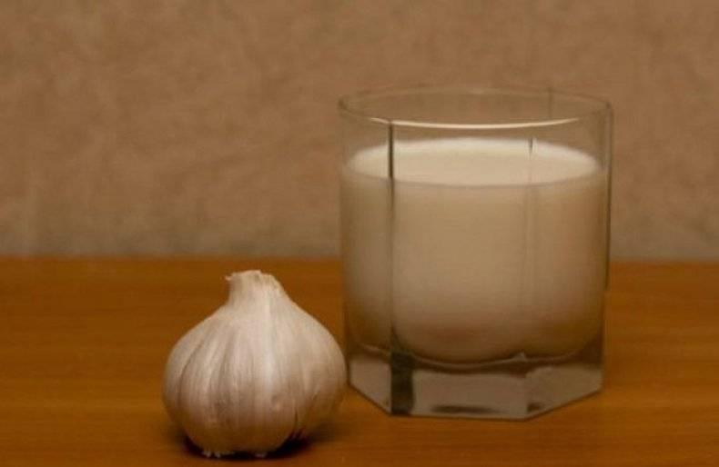 Молоко с чесноком: рецепты, которые помогут сохранить молодость и