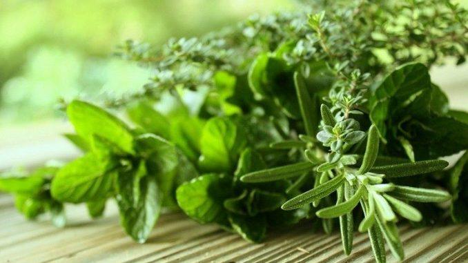 Какие травы, влияют на плод и беременность женщины?
