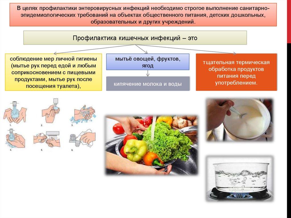 Цикл и схема развития человеческой аскариды, инкубационный период и сколько живут