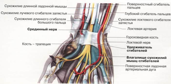 Лечение нейропатии малоберцового нерва народными средствами: лфк при поражении болезнью