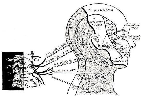 Боль в шее и затылке: причины и лечение, что делать, где находится