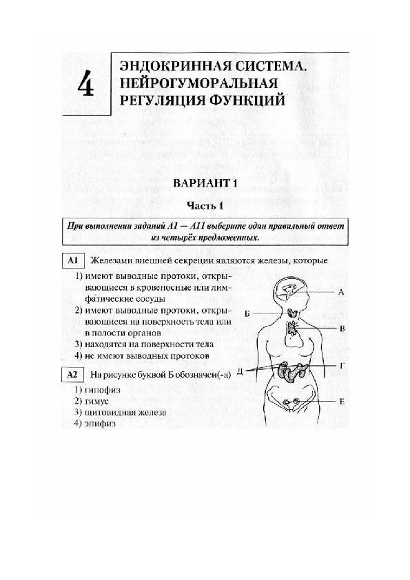 Эндокринная система